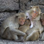 Being the Change, Tipping Points and a Lot of Monkeys