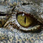 The Reptilian Roots of Pedophilia