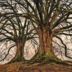 As a Tree