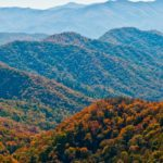 Appalachia: The Endless Forest – Nature Documentary