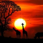 Paradise, African Style