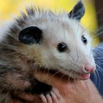 Saving Animals in a Flood