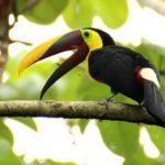 Injured Toucan Gets 3D-Printed Beak