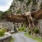 The Dying Prophecy of the Eagle and the Condor