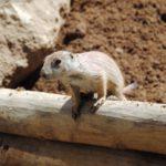 Lemmings Don't Jump Off Cliffs