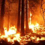 The Relentless Burning of Earth's Forests