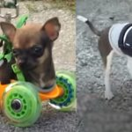 Kindness of Strangers: Aerospace Engineer Designs Wheels for Two-Legged Dog