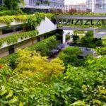 Singapore Hospital Has Introduced Nature as Medicine