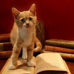 This Bookstore is Filled With Adorable Little Foster Kittens That You Can Adopt