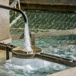 Fluoridation: The Biggest Public Health Failure of the Twentieth Century