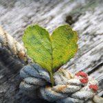 The Practical Practice of Gratitude
