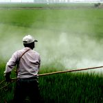 Bayer Reaches Verbal Deal to Settle Up to 85,000 Roundup Cancer Lawsuits