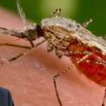 Eco-Genocide and the Genetically Engineered Mosquito Army