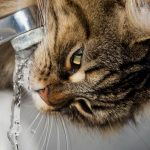 The End of Fluoridation Is in Sight
