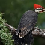The Miracle of Woodpeckers