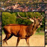 Dr. Joseph P. Farrell: Speculation on En Mass Reindeer, Bird & Elephant Deaths