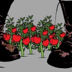 Attack of the Tomato Killers: The Police State's War on Weed and Backyard Gardens