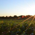 Weather Warfare & Food Rationing | Corn Shortage: Grand Solar Minimum Kills Crops