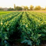 What Big Ag Doesn't Want You to Know: Small Farms Can Feed the World
